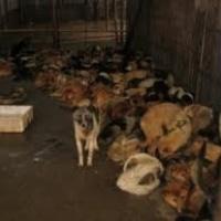 Betiltják a 600 éves kutyahúsevő karnevált