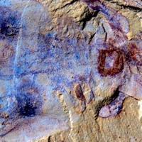 520 millió éves tengeri állat maradványaira bukkantak