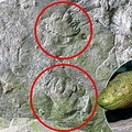 300 millió éves lábnyomot találtak