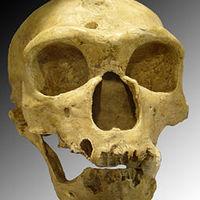 A neandervölgyiek géntérképe