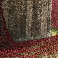 800 ezer piros pipacs ömlik alá vérzuhatagként a Towerből