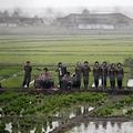 A rizsnek is zenélnek a kommunisták