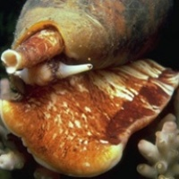 Stoppal utaznak a tengeri csigák