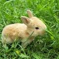 Nem vehetünk élő nyulat húsvétra!
