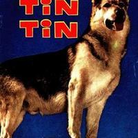 Divatba jönnek a kutyák Hollywoodban