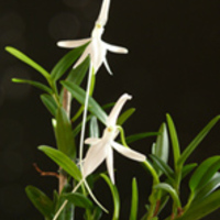 Orchidea és Bromélia kiállítás nyílik