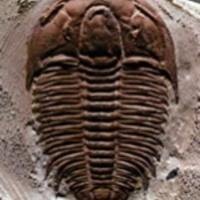 90 cm-es őskagylók titka