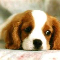 A kutyákért szól a zene Káposztáson
