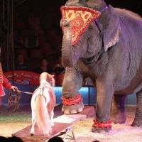 Magyar cirkuszcsillagok a POSZT-on