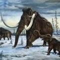 Kiderült, miért haltak ki a mamutok