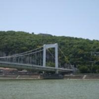 Nem álhír: vaddisznó-baleset a budapesti belvárosban