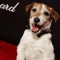 Kutya lábnyoma került a legnagyobb hírességek lenyomata mellé