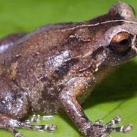 Seregnyi bizarr új állatfajt fedeztek fel