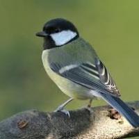 A madárdaltól jobb az élet