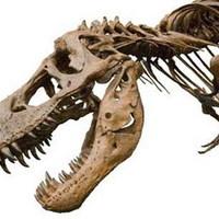 Ahová halni jártak a dinoszauruszok