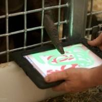 A majmoknak is jár az iPad