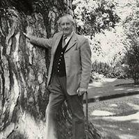 Kivágják Tolkien fáját Oxfordban
