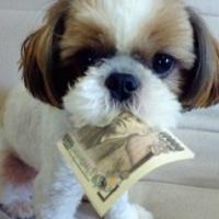 Állatok, akiknek sokkal több pénze van, mint Neked