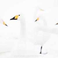 A fehér egyszerű tökéletessége