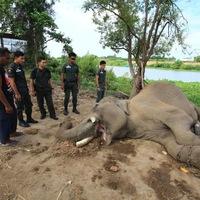 Megölték a híres elefántot