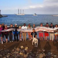 Víziszörnyre bukkantak Kalifornia partjainál