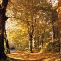 Erdők a közjóért - mindenkinek
