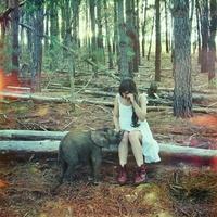Kiselefánt bolondozott az erdőben