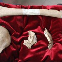 Mauzóleumban helyezik el Caravaggio csontjait