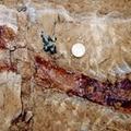 Új dinoszaurusz fajt fedeztek fel