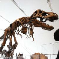 Tyrannosaurusok lábnyomaira bukkantak Kanadában