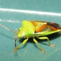Több millió éves titkot őriznek a bogarak