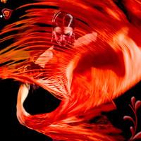Újra spanyol ritmusok a Millenárison