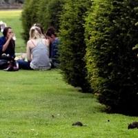 Kártevők lepték el a Tuileriák kertjét