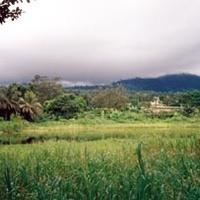A vásottkalapos úr a Kamerun-hegy árnyékában