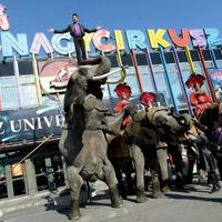 Húsz éves rekordot döntött meg a cirkusz