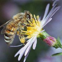 A kokaintól még a méhek is