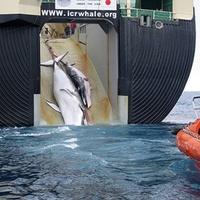 Mostantól retteghetnek a bálnák