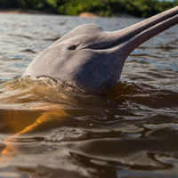 Delfinkövületekre bukkantak egy perui sivatagban
