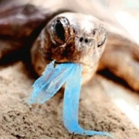 Betiltanák a műanyag zacskókat?