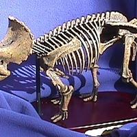 Nem tudták eladni egy 150 millió éves dinó csontvázát