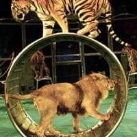 Betiltják az állatszámokat a görög cirkuszokban