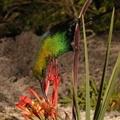 Ülőkét fejlesztett ki a növény a madaraknak