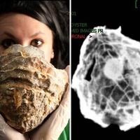 Hatalmas gyöngyöt rejt egy ősi kagyló