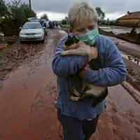 Vörösiszapos macskáé a fődíj