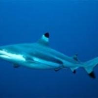 Ne legyen több cápauszonyleves!