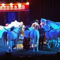 Magyarul hirdeti előadásait egy olasz cirkusz Észak-Szlovákiában