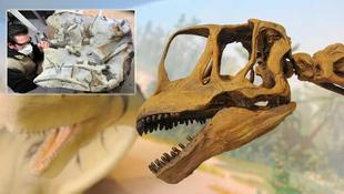 Dinócsontokat találtak a kőfejtőben