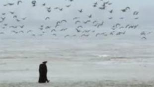 Újabb rangos elismerés közelében a magyar természetfilm