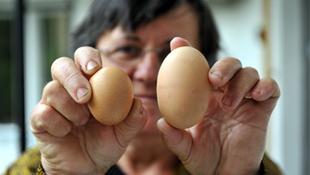 Ezt látni kell! Óriási tojást tojt a csombárdi tyúk