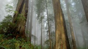 Modern Maugli – évekig erdőben élt a tinédzser